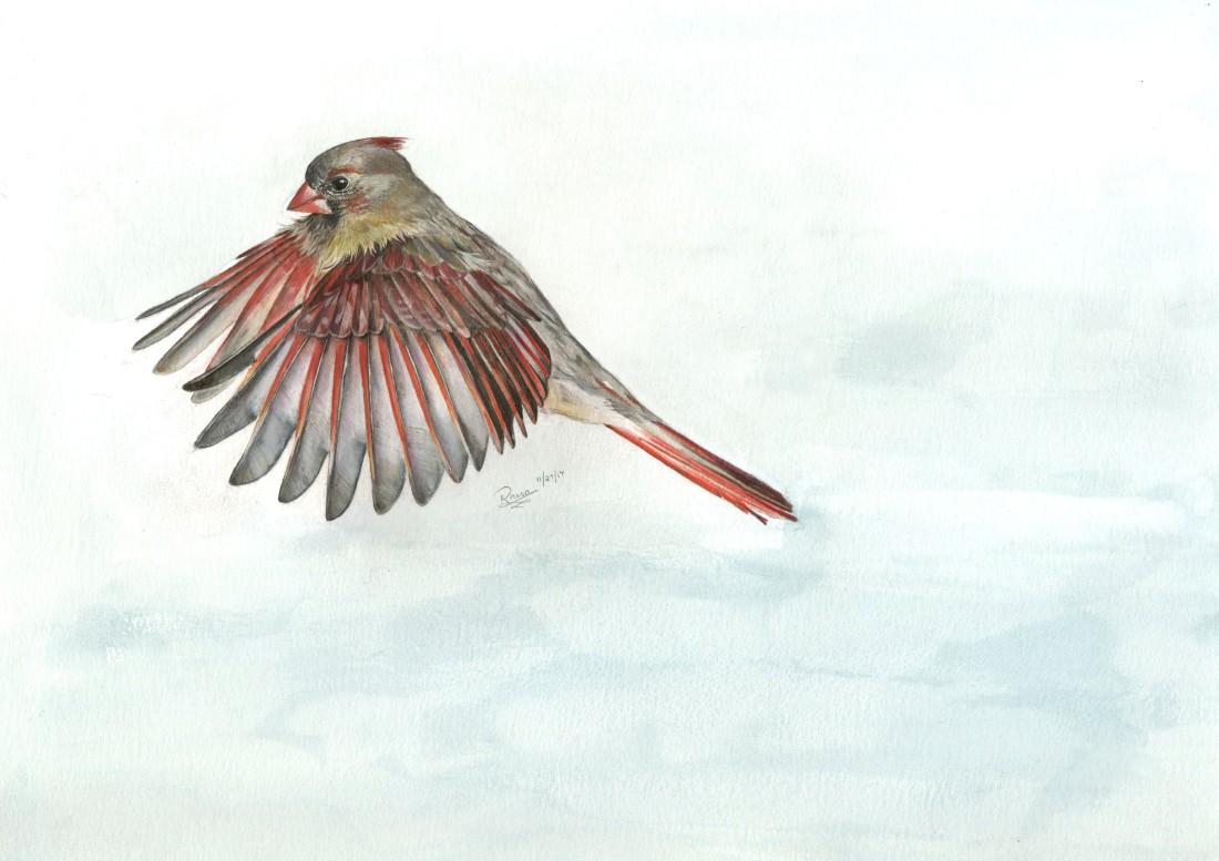female cardinal003